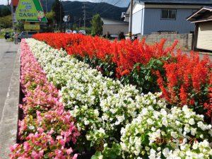 sannaioosawa_2